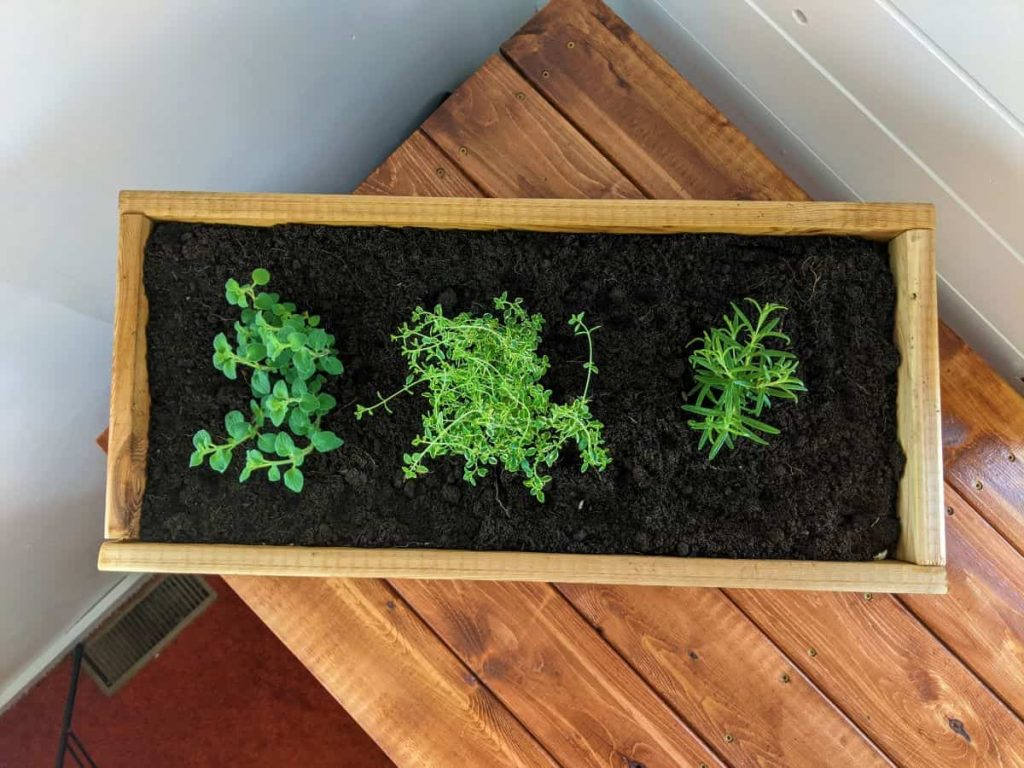 herb plants in wooden planter on a table