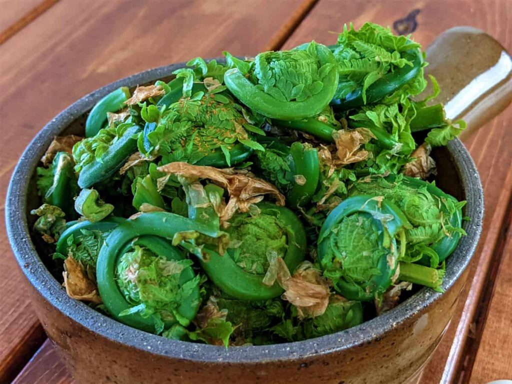 uncleaned fiddleheads in a bowl on a table