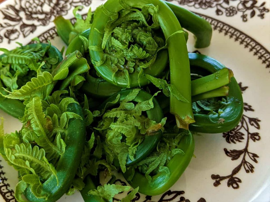 a dish of fern fronds